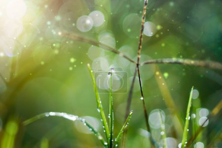 Fresh morning dew on spring grass, natural green light backgroun