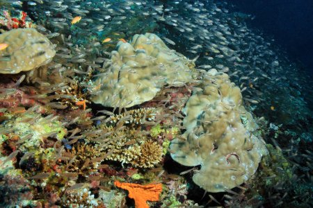 Coral Reef and Schooling Fish