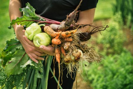 Photo for Women holding delicious fresh vegetables - Royalty Free Image