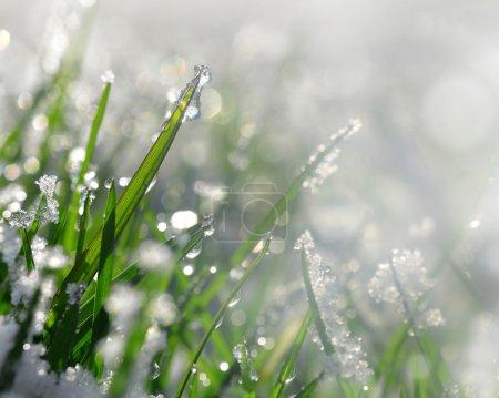 Frozen grass close up.