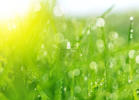 Fresh spring bokeh and green grass.