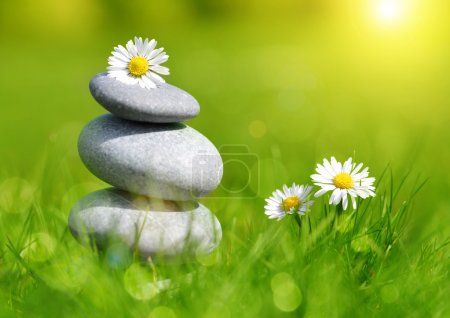 Green grass with stones and daisies