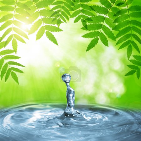 Photo for Spring green leaves of tree above the water level. Natural background. - Royalty Free Image