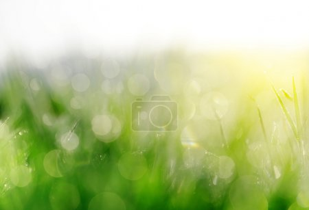 Fresh spring bokeh in green grass.