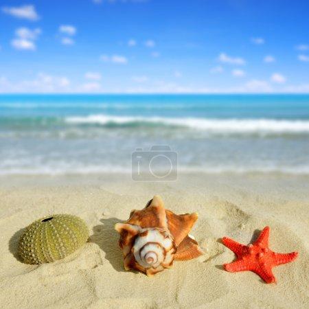 Sea shells with starfish
