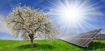 Foto de Paneles de energía solar con árbol en flor en el paisaje de primavera . - Imagen libre de derechos