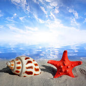 Conch shell with starfish