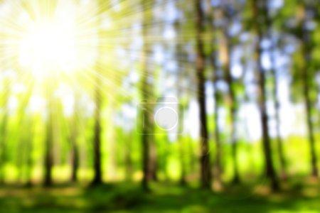 Photo pour Bokeh vert dans la forêt. Contexte naturel . - image libre de droit