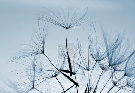Photo for Dandelion flower. Beautiful nature details. - Royalty Free Image