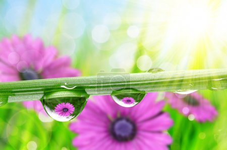 Photo for Flowers in the drops of dew on the green grass. Nature background. - Royalty Free Image