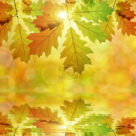 Photo for Autumn leaves of oak tree - Royalty Free Image