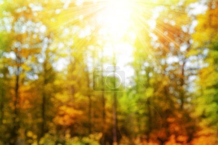 Photo pour Bokeh dans la forêt d'automne. Fond naturel automnal flou avec les rayons du soleil . - image libre de droit