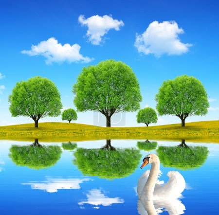 Photo for Swan in the spring landscape - Royalty Free Image