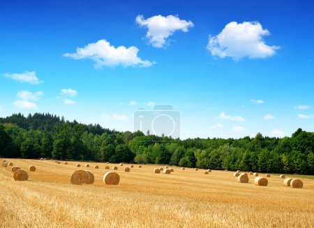 Photo for Straw bales on farmland with blue cloudy sky - Royalty Free Image