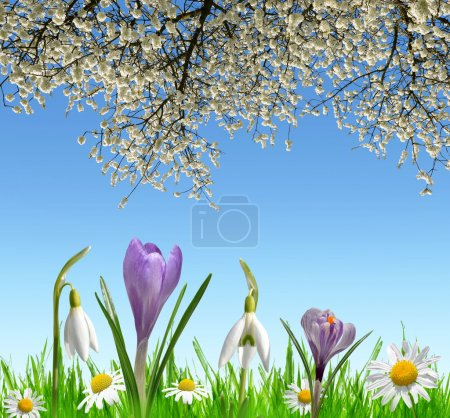 Photo for Spring flowers snowdrops, Crocus and Daisy on meadow. - Royalty Free Image