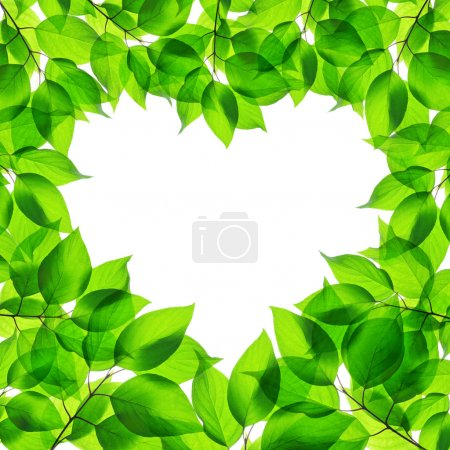 Photo for Spring green leaves in heart shape on white background - Royalty Free Image