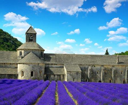 Abbaye de Senanque - Provence, France