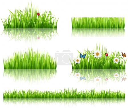 Illustration for Green grass collection. Vector illustration - Royalty Free Image
