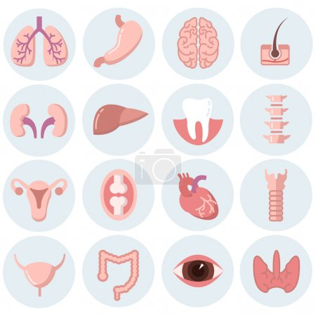 Illustration for Human organs flat icons vector set. Organ anatomy set, health human organ, brain organ, medicine internal organ, heart and liver, lung and eye illustration - Royalty Free Image