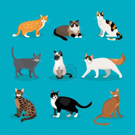 Illustration pour Set of vector cats depicting different breeds and fur color standing  sitting and walking on a blue background - image libre de droit
