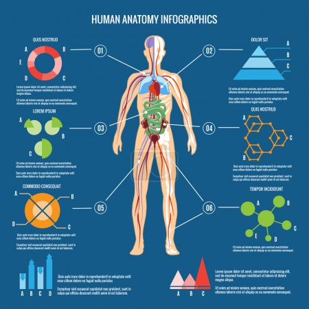 Human Body Anatomy Infographic Design