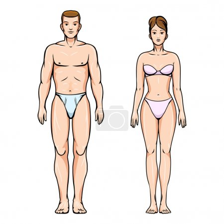 Illustration for Man and woman healthy body figures.  Healthy people, sport and health, l, ideal young, vector illustration - Royalty Free Image