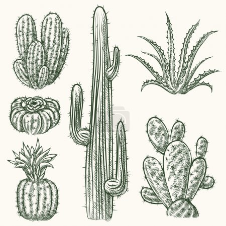 Hand drawn vector cactus