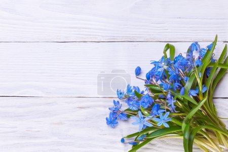 Photo pour Nature morte avec des fleurs de chute de neige bleu printemps - image libre de droit