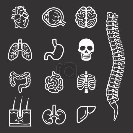 Illustration for Human internal organs detailed icons set. Vector illustration. - Royalty Free Image