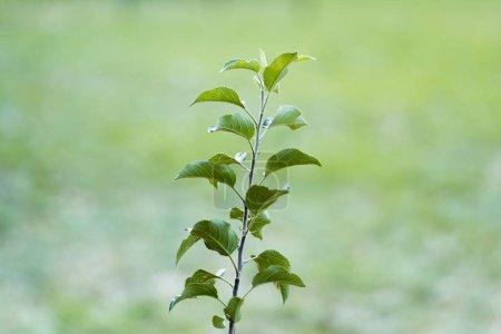 Foto de Planta joven con hojas verdes que crecen sobre fondo borroso, concepto de ecología - Imagen libre de derechos