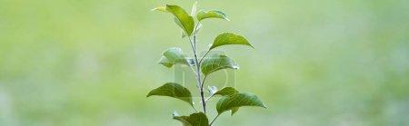 Photo pour Jeune semis vert poussant sur fond flou, concept écologique, bannière - image libre de droit