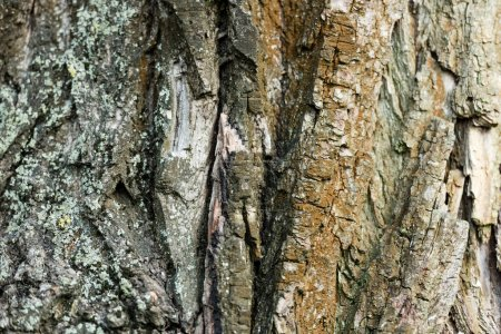 Photo for Close up view of rough tree bark, ecology concept - Royalty Free Image