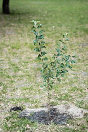 Photo for Young green tree growing on blurred background, ecology concept - Royalty Free Image