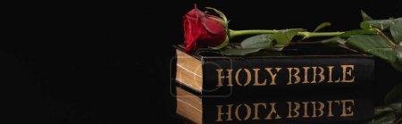 Photo pour Rose rouge sur fond noir, concept funéraire, bannière - image libre de droit