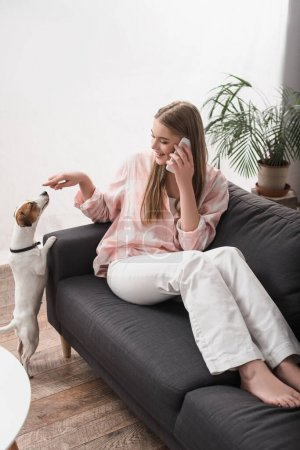 Photo for Cheerful woman sitting on couch, playing with jack russell terrier and talking on smartphone - Royalty Free Image