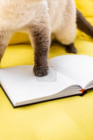 cropped view of cat stepping on blank notepad, blurred background