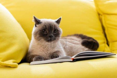 fluffy cat relaxing on sofa near open notepad