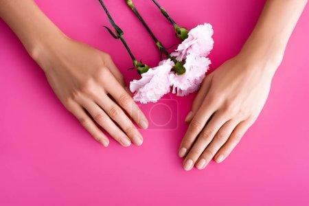 vue de dessus des mains féminines avec des ongles brillants et des fleurs d'oeillet sur fond rose