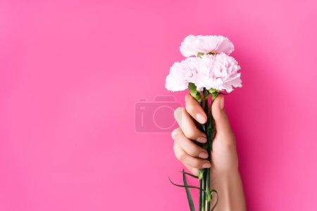 vista parcial de mujer con manicura pastel brillante sosteniendo flores de clavel sobre fondo rosa