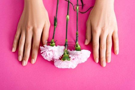 vue du dessus des fleurs d'oeillet près des mains féminines avec manucure brillante sur fond rose