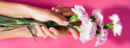 vista recortada de la mujer con manicura brillante celebración de flores de clavel sobre fondo rosa, bandera