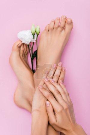 vista superior de pies y manos femeninas con esmalte pastel en las uñas cerca de la flor de eustoma blanco sobre fondo rosa