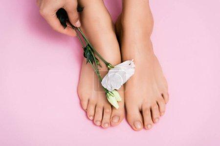vista recortada de la mujer sosteniendo flor de eustoma blanco cerca de los pies con barniz de uñas brillante sobre fondo rosa