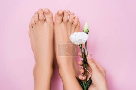 vue partielle de la femme tenant fleur d'eustomie blanche près des pieds avec vernis à ongles pastel sur fond rose