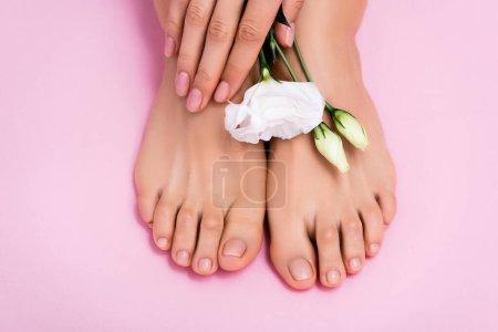 vue du dessus de la fleur d'eustomie blanche près des pieds et des mains féminins toilettés avec du vernis à ongles pastel sur fond rose
