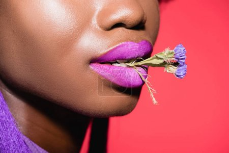 cropped view of african american young woman with flower in mouth isolated on red
