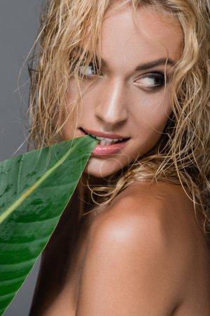 Photo pour Femme blonde sexy aux cheveux mouillés et aux feuilles vertes isolées sur gris - image libre de droit
