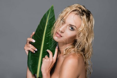 blonde woman with wet hair and green leaf isolated on grey