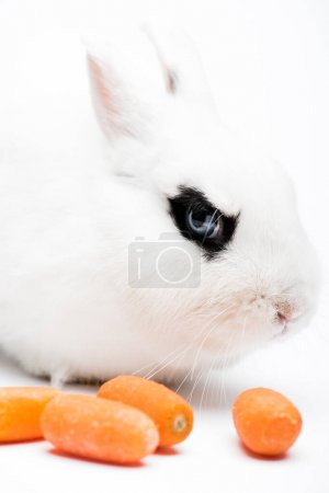 cute rabbit with black eye near carrot on white background