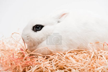 cute rabbit with black eye in nest on white background
